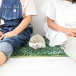 子供の可能性は無限大!色んな習い事をしてみよう!習い事・入学前編